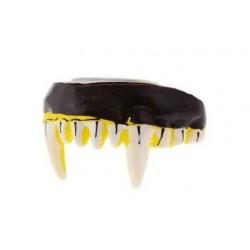 Vilkolakio dantys